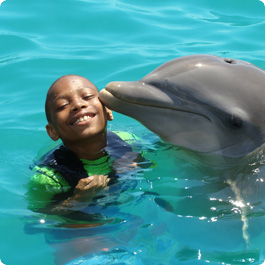 Dolphincove-swimwithdolphinscayman-004